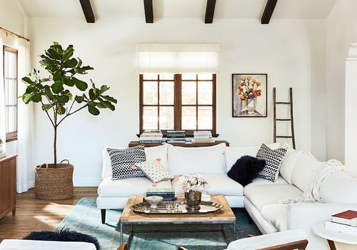 A fiddle leaf fig in a bright living room