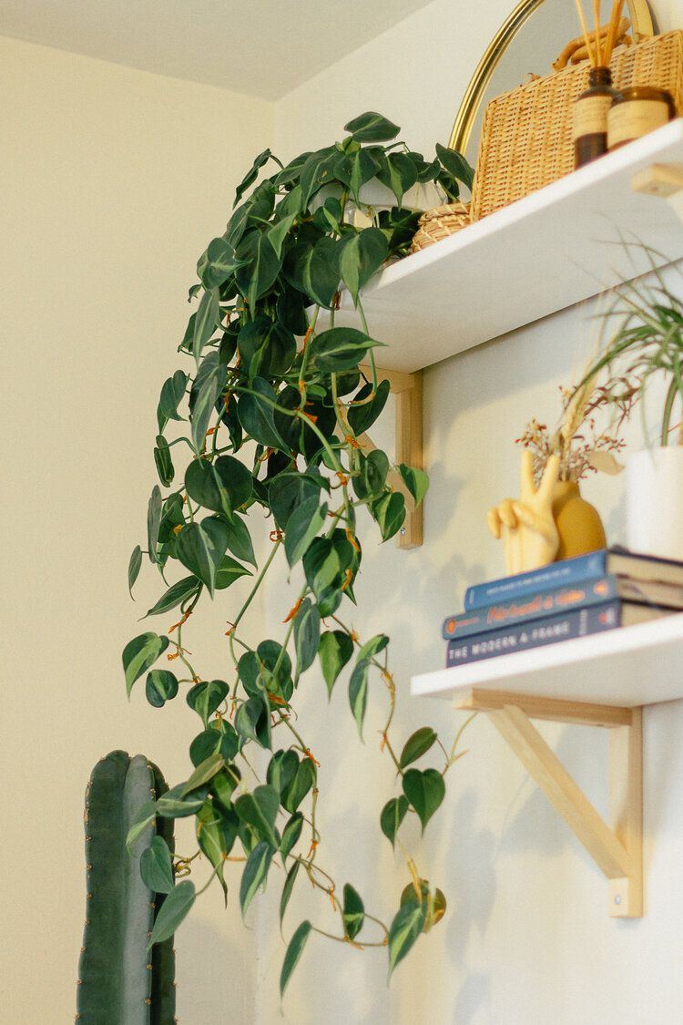 12 Varieties of the Trendy Philodendron Plant You Should Know