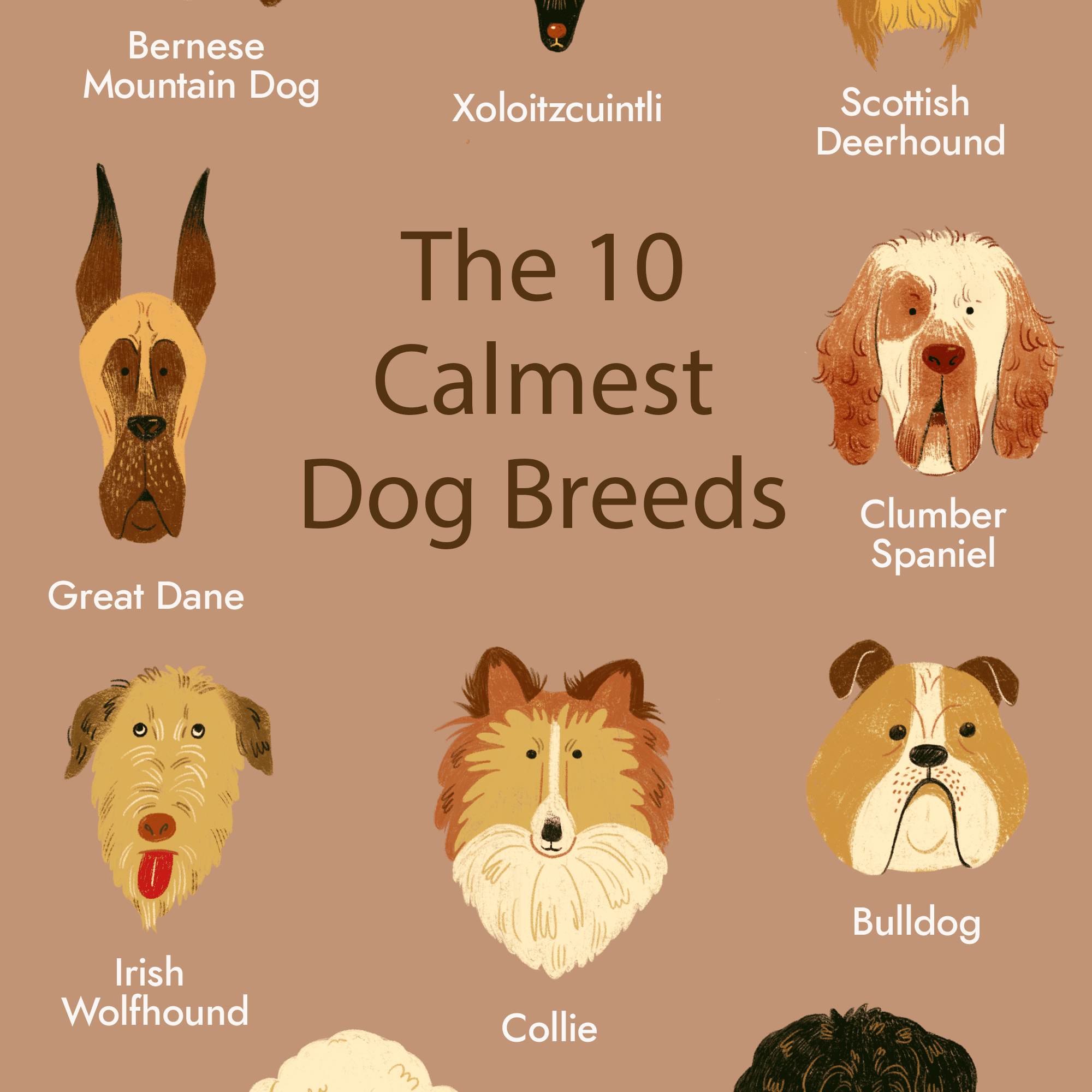 Top 10 Calmest Dog Breeds Perfect For