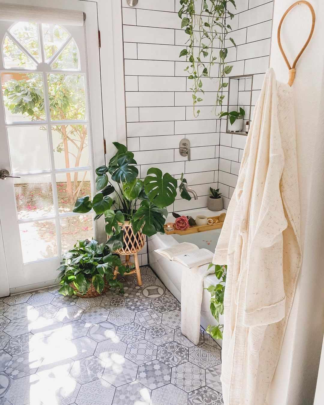 Plants in sunny bathroom.