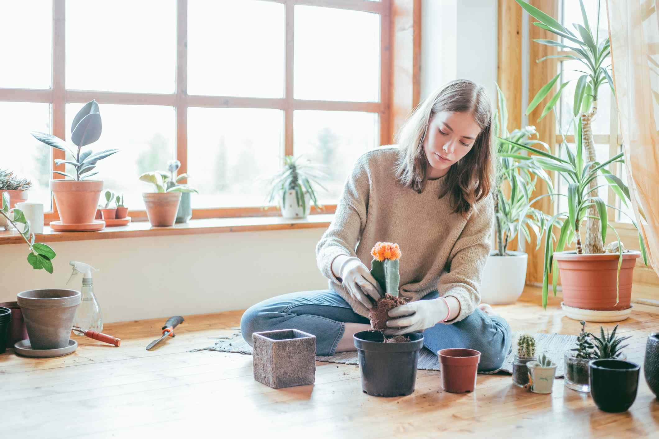 These 11 Houseplants Will Thrive By Your Windows