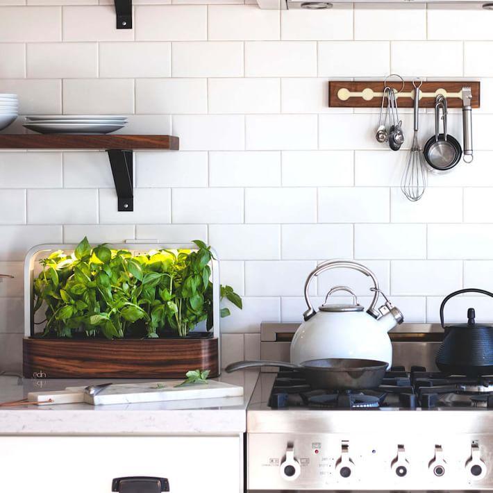 edn small garden in kitchen