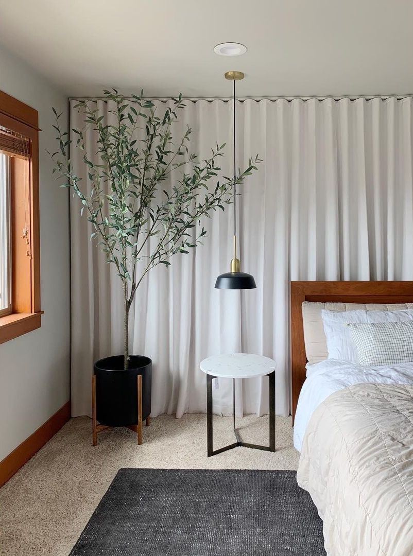 Olive tree in a bedroom
