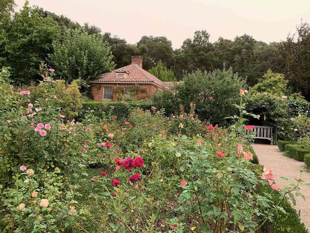 Large rose garden with lots of varieties of roses.