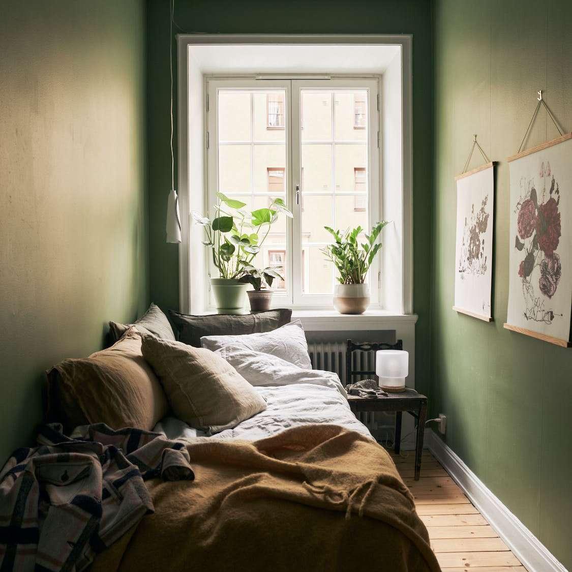 ZZ plant on a bright windowsill in a cozy green bedroom