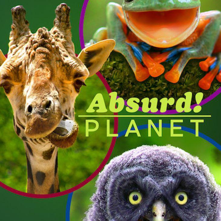 Absurd! Planet documentary poster