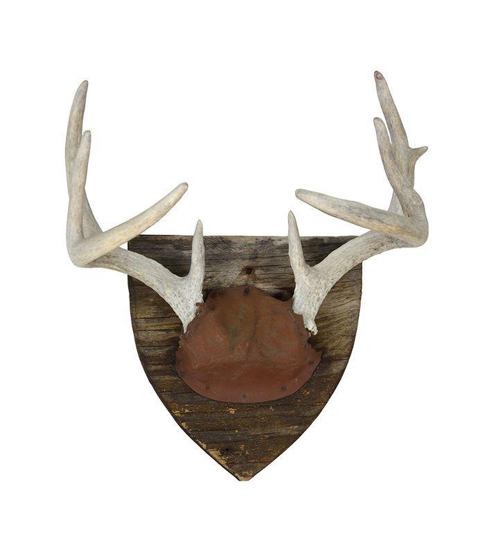 Vintage Rustic Deer Mount