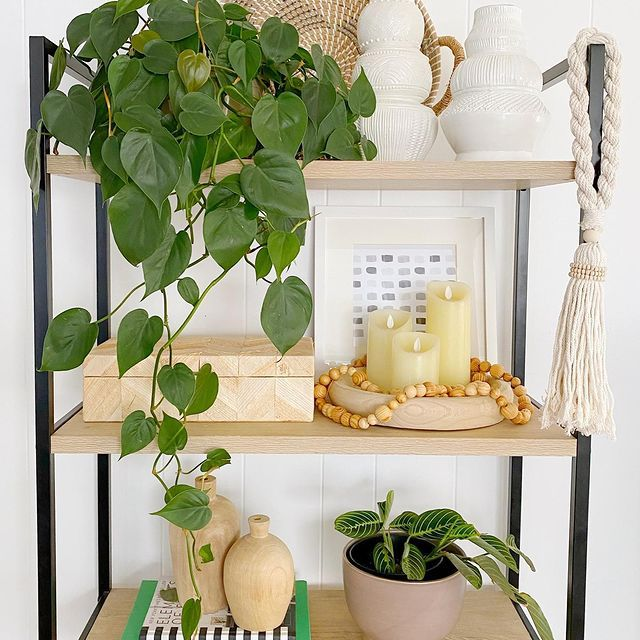 heartleaf philodendron on a styled shelf