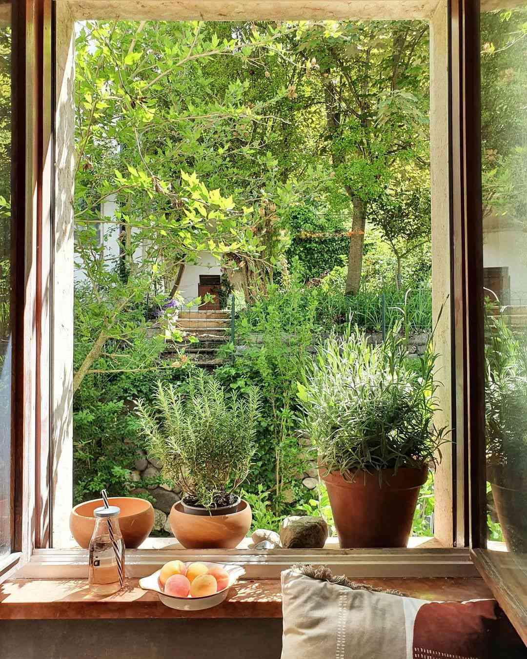 Herb garden on windowsill.