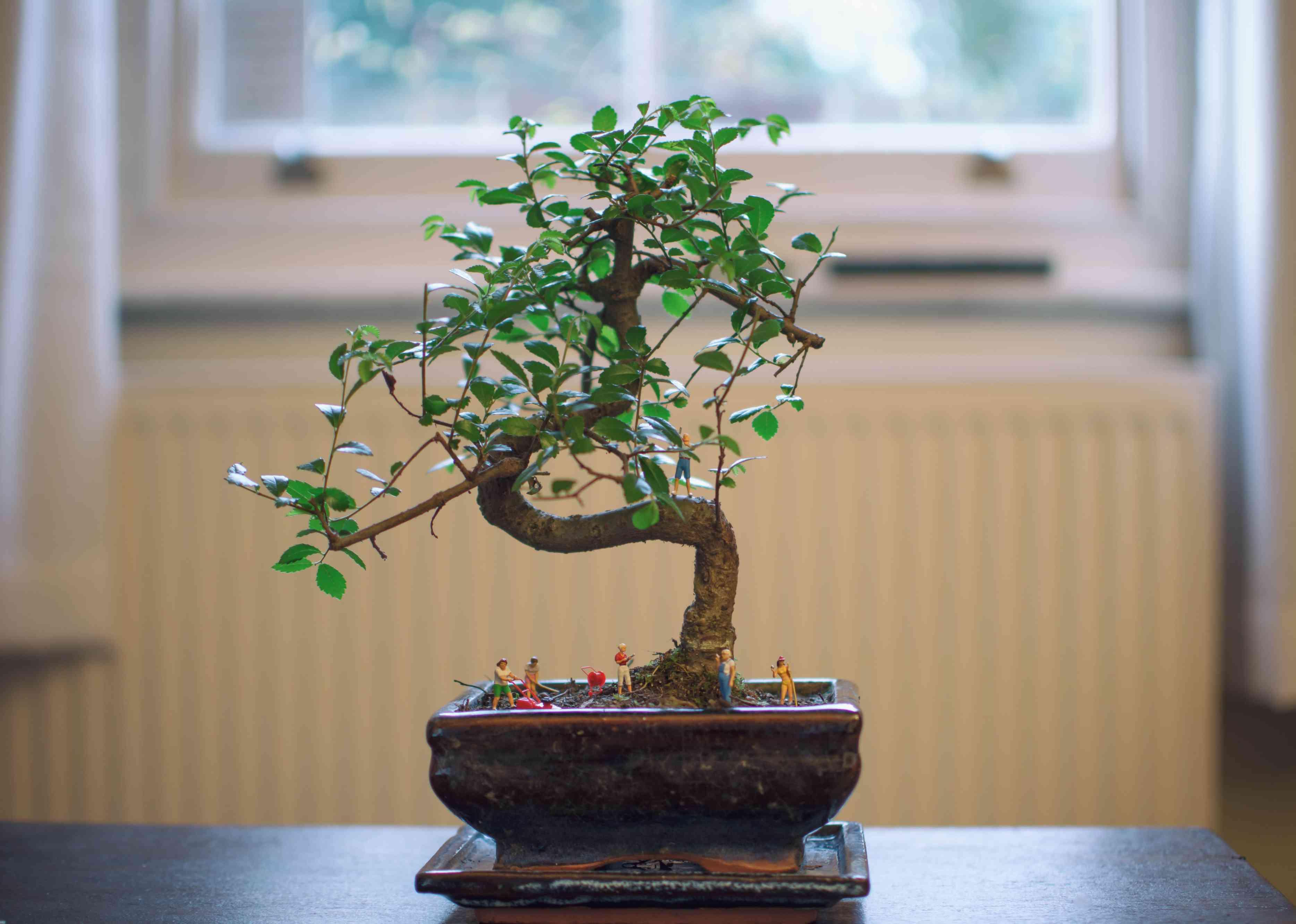 Bonsai tree in a shallow planter.
