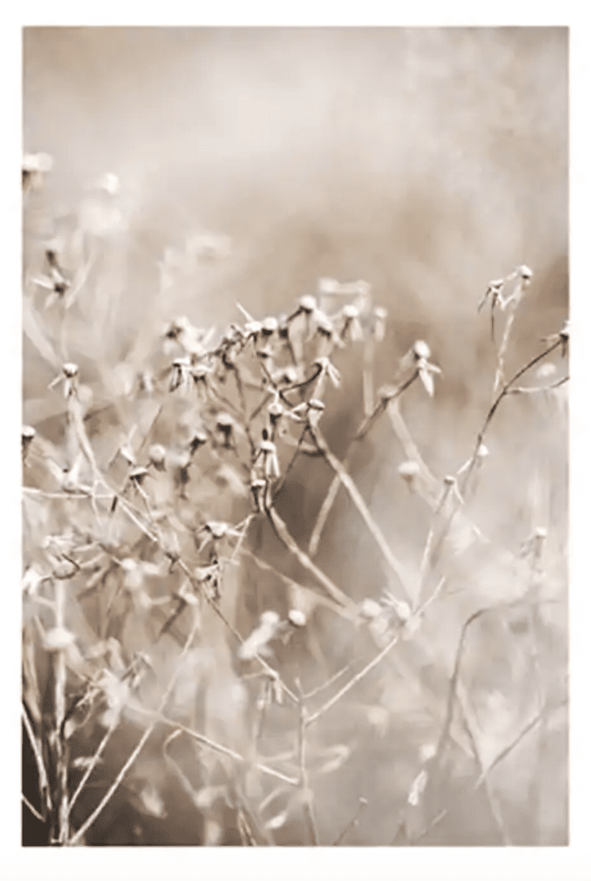 Dried Floral Life No 1 Poster