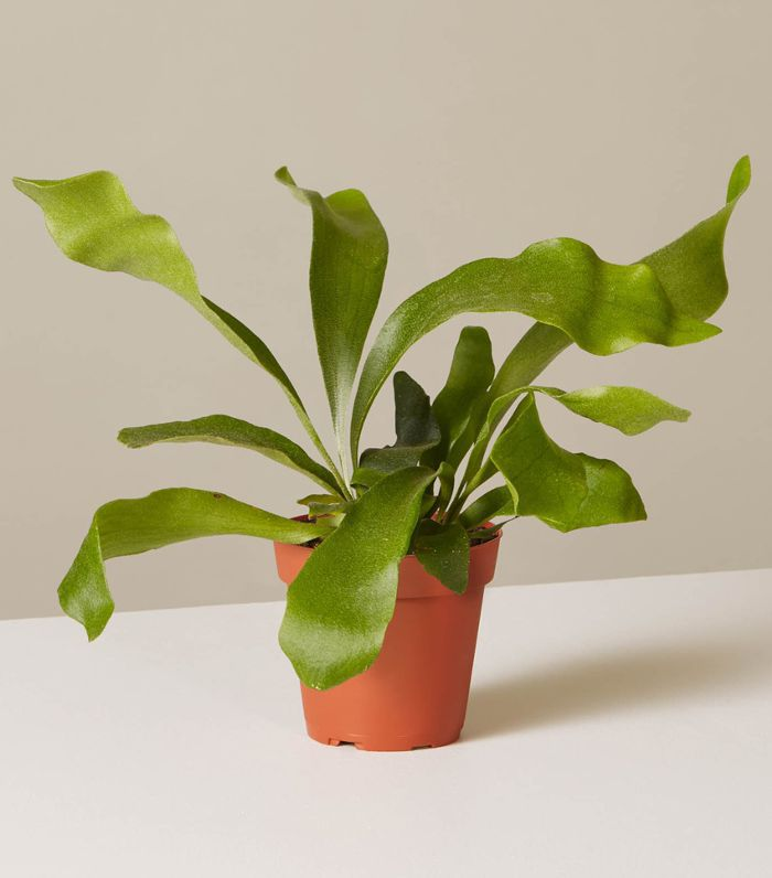 The 10 Best Indoor Hanging Plants That Thrive in Apartments Names Of Low Light Houseplants on low light plants, low light shrubs, low light succulents, low light vines, low maintenance indoor plants, low light weeds, low light flowers outdoors, low light garden, low light bromeliads, low palm bushes, low light health, low light tropicals, low maintenance shade plants, low light trees, low light bonsai, low light cactus, low light roses, low light landscaping, low light orchids, low light palms,