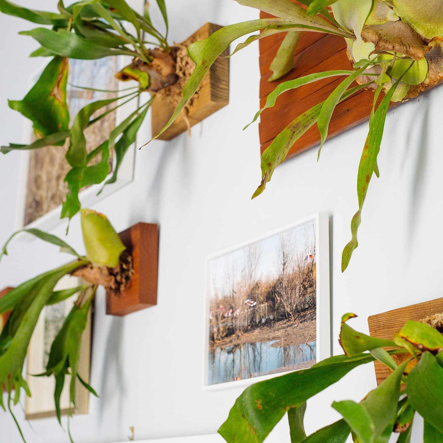 plants on the wall
