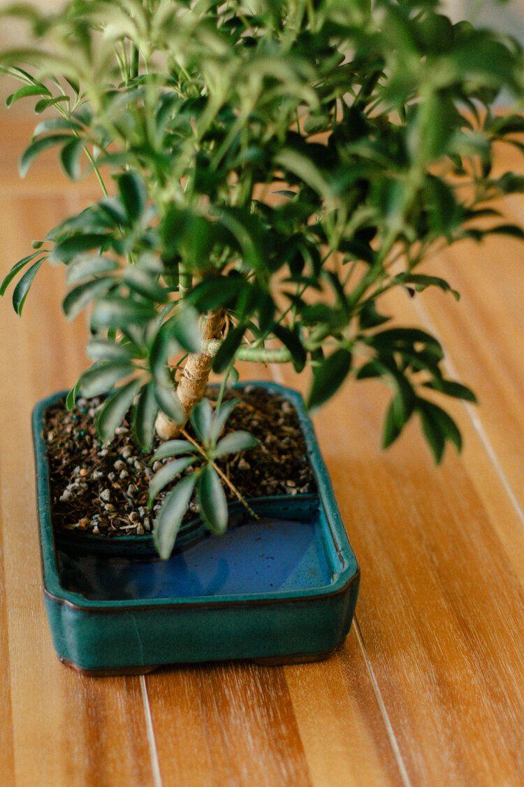 bring outdoor plants indoors