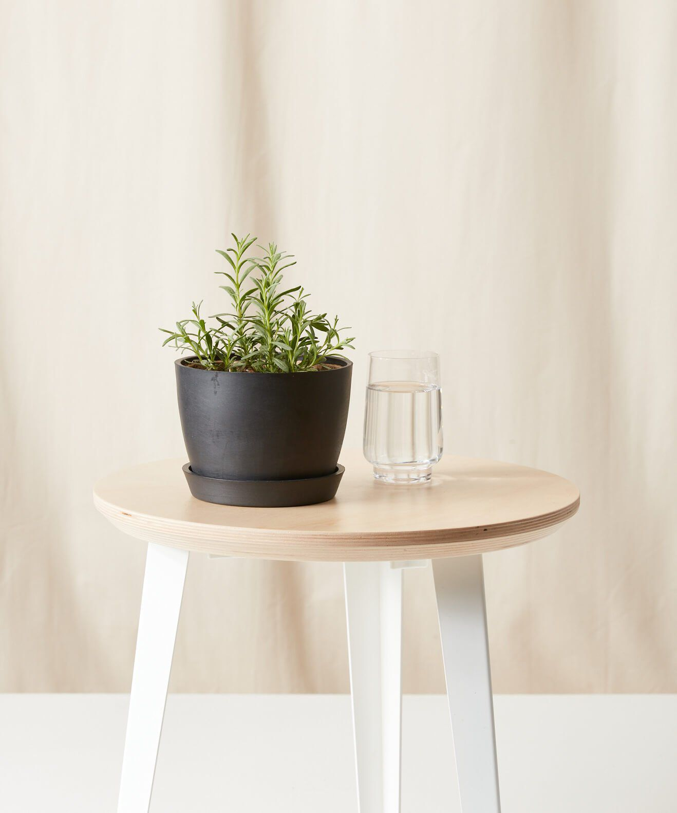 Lavender plant in charcoal pot on a wood stool next to a glass of water