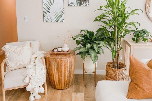 Plants on living room floor.
