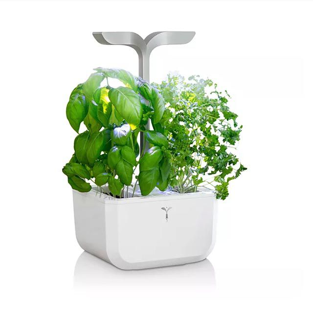 The 12 Best Plant Grow Lights Of 2021