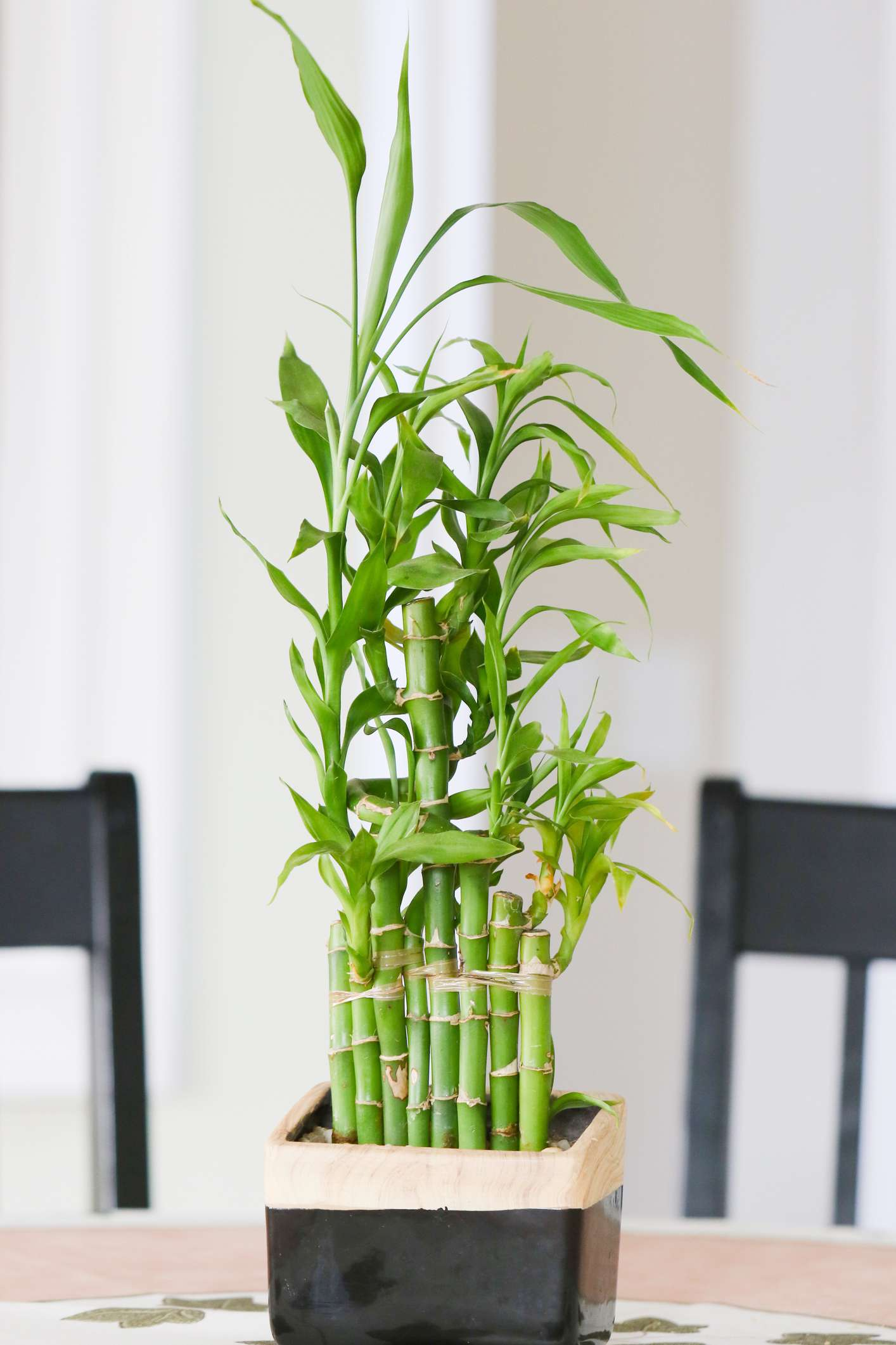 Bamboo plant on a dining table