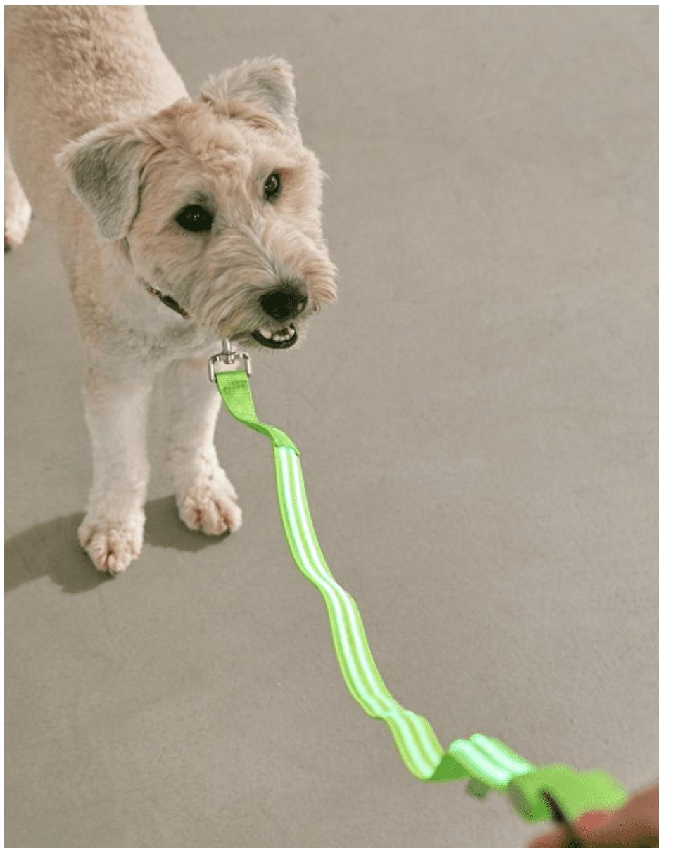 Pup on LED dog leash