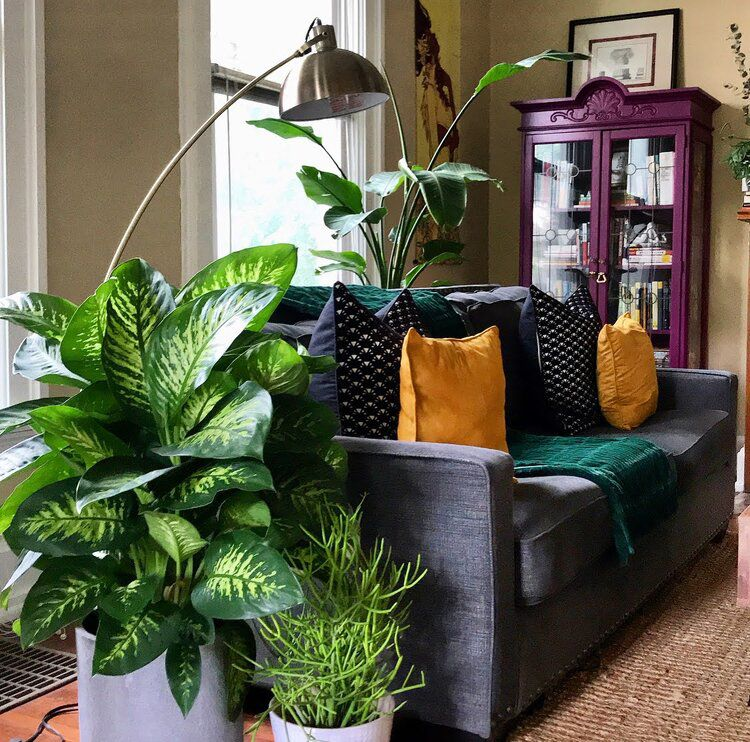 Bohemian living room with chambray couch, plants, and purple armoire