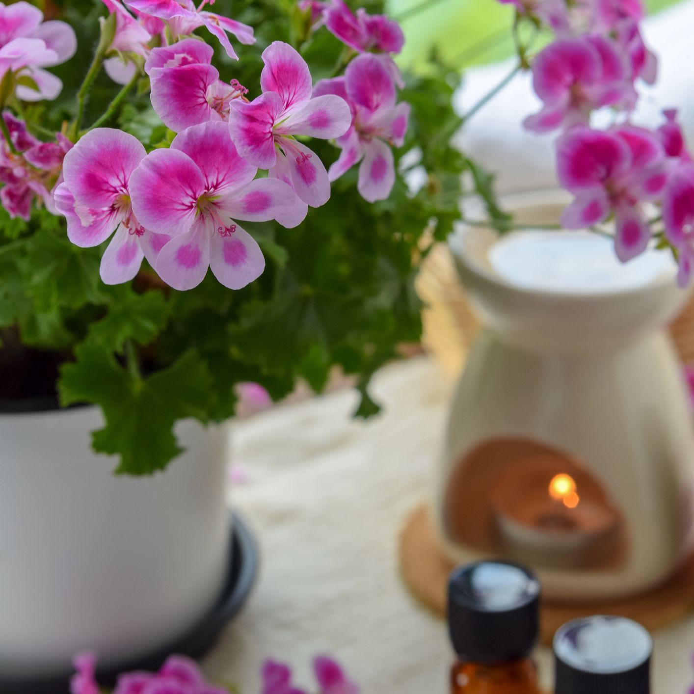 essential oils with rose geranium flowers at spa salon