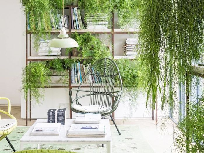 The 10 Best Indoor Hanging Plants That