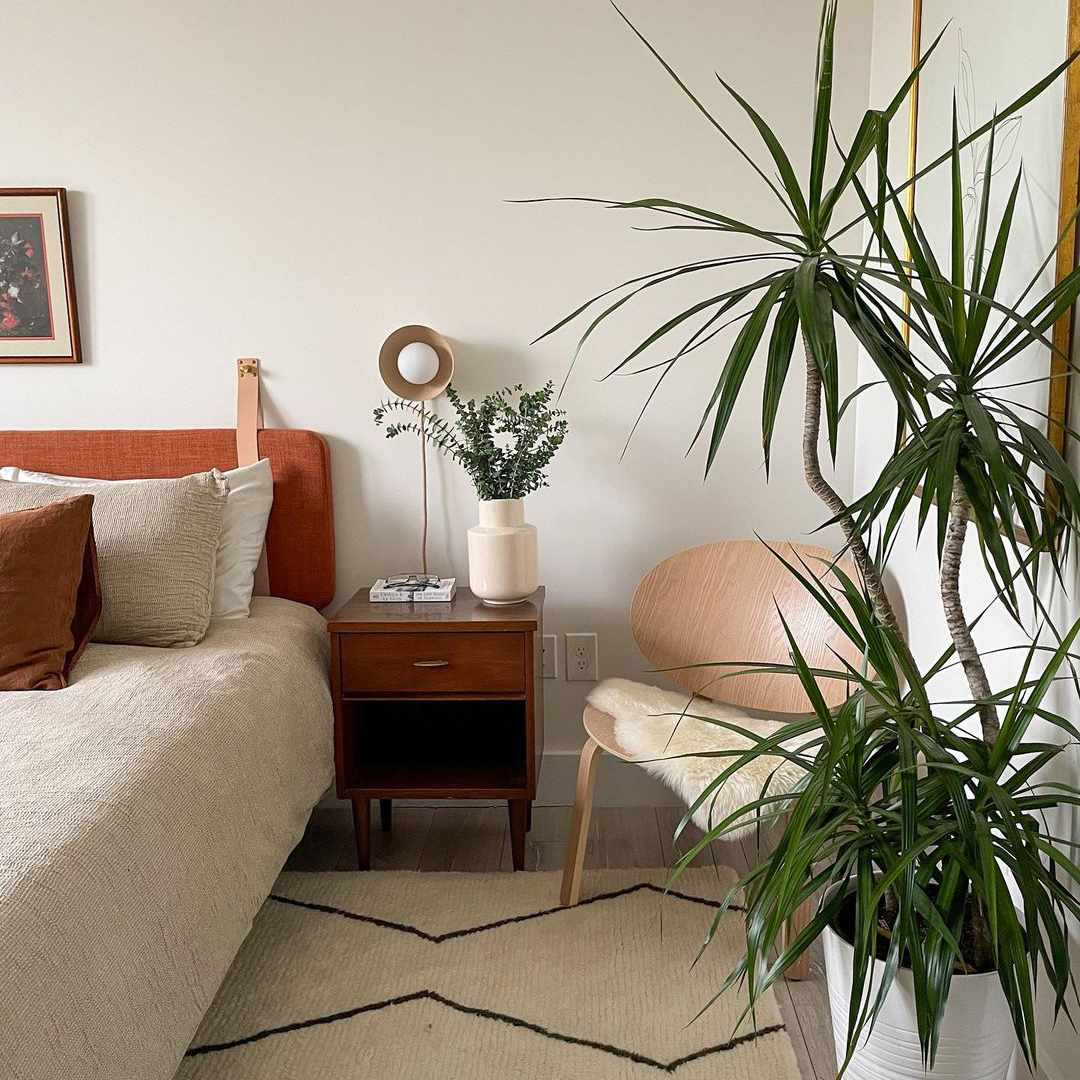 Minimalistic bedroom with large plant.