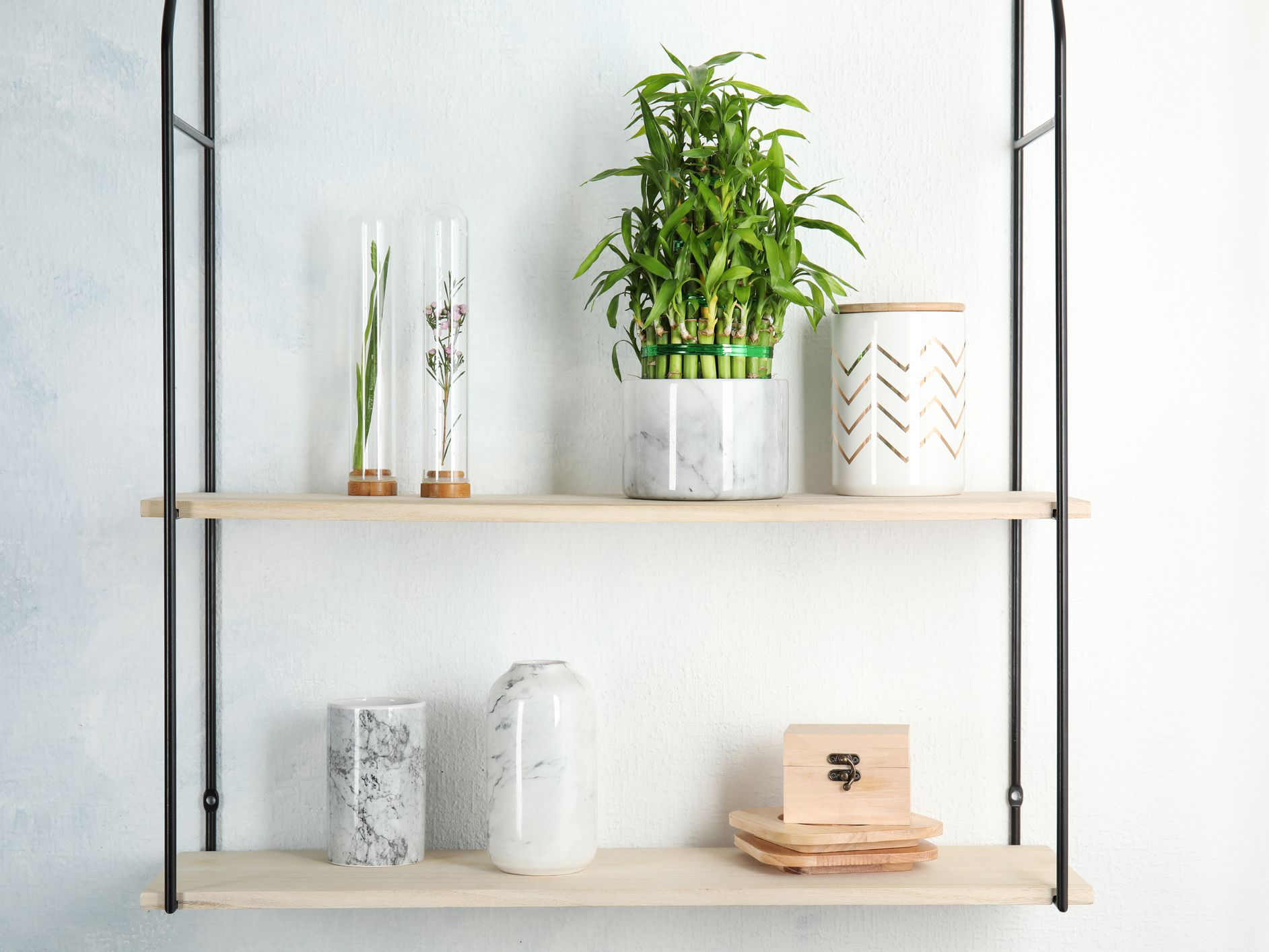 Lucky Bamboo Plant Care Growing Guide