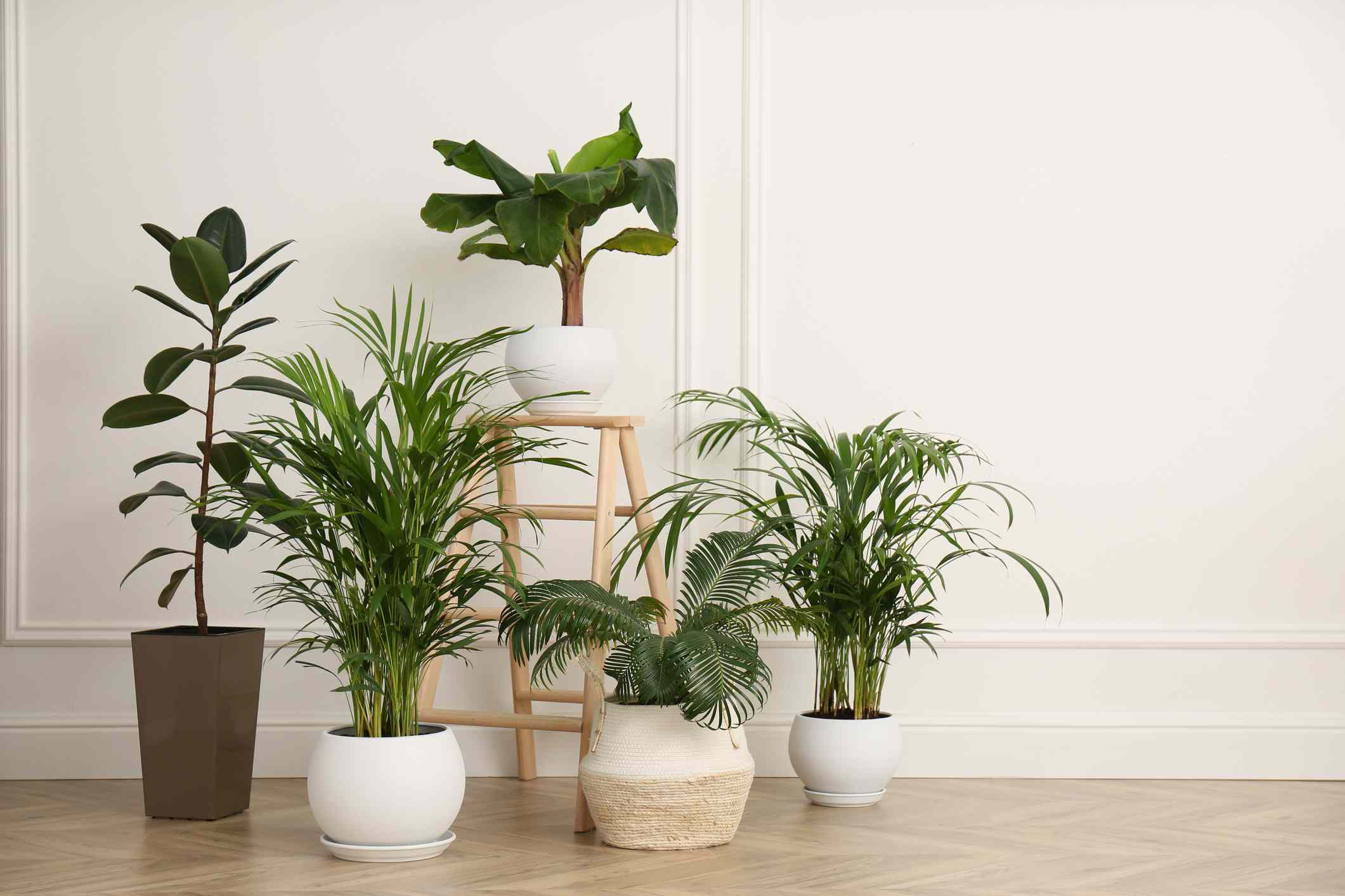 Bamboo palm, parlor palm, and various tropical plants in pots