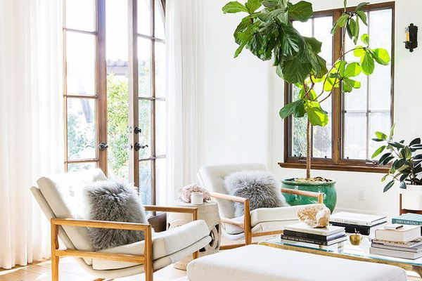 How to decorate with large plants