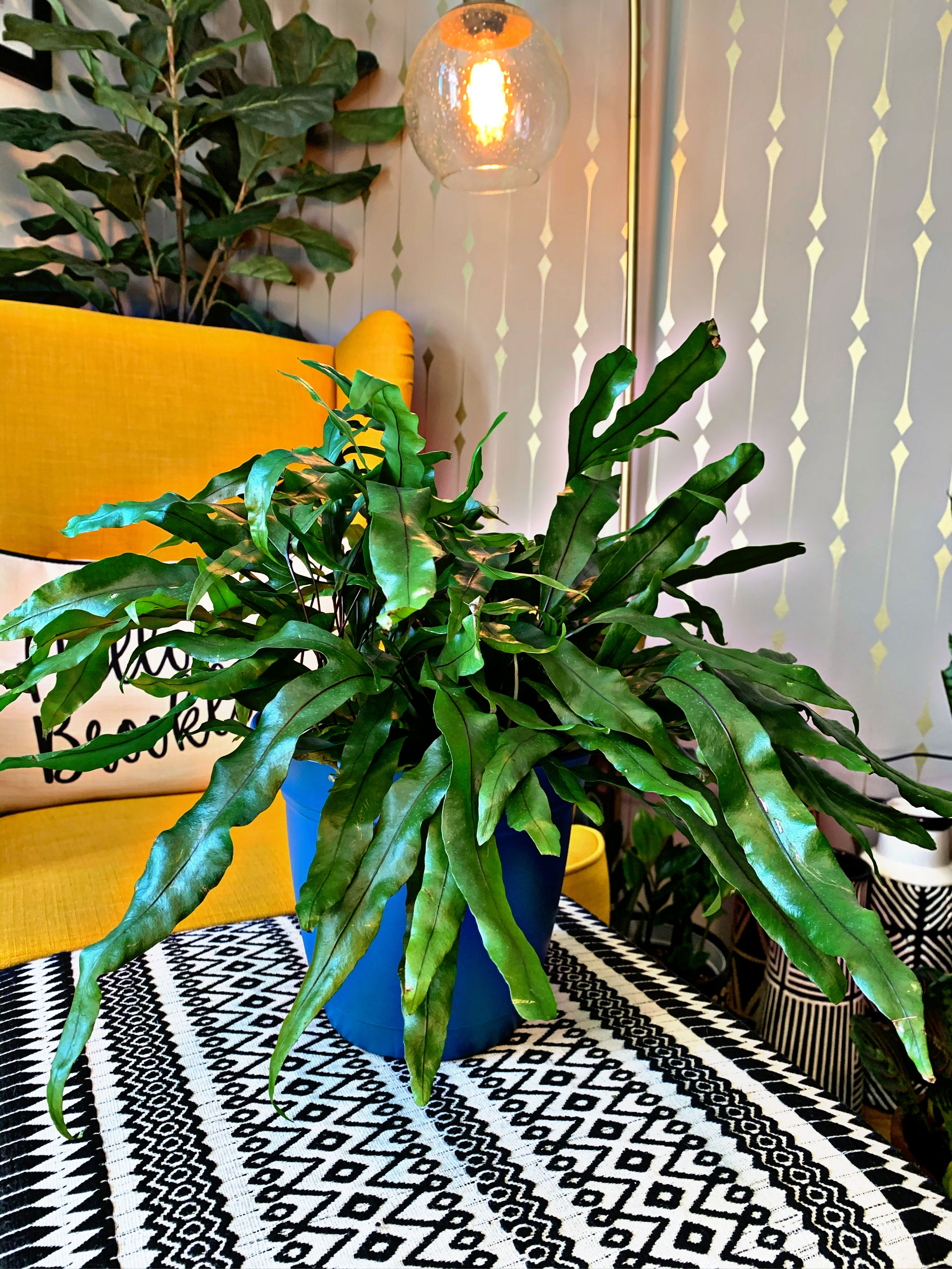 Your Complete Guide to Caring For (and Propagating) a Kangaroo Paw Fern