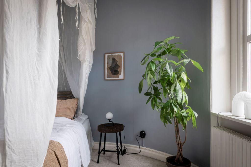 Money tree in a sunny, modern bedroom