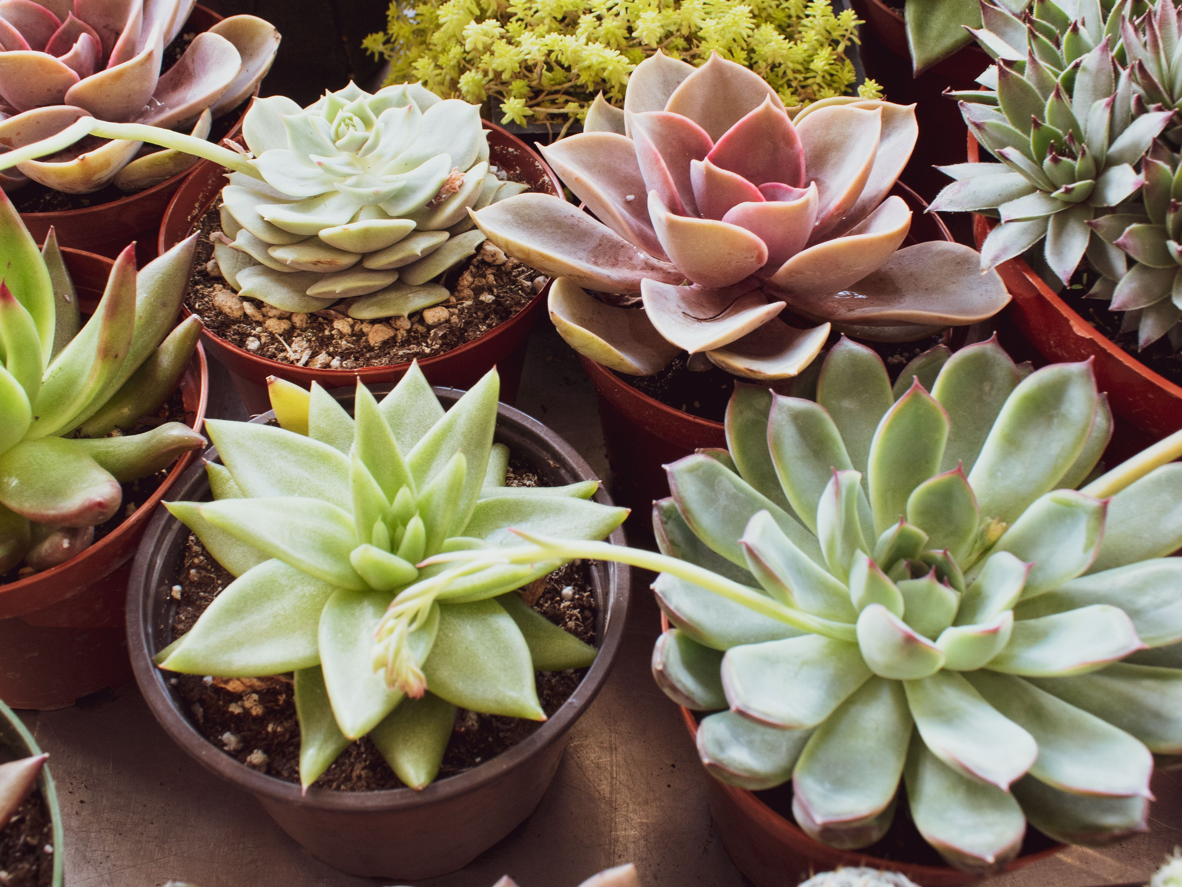 14 Colorful Houseplants That Will Brighten Up Your Home Facebook is showing information to help you better understand the purpose of a page. 14 colorful houseplants that will
