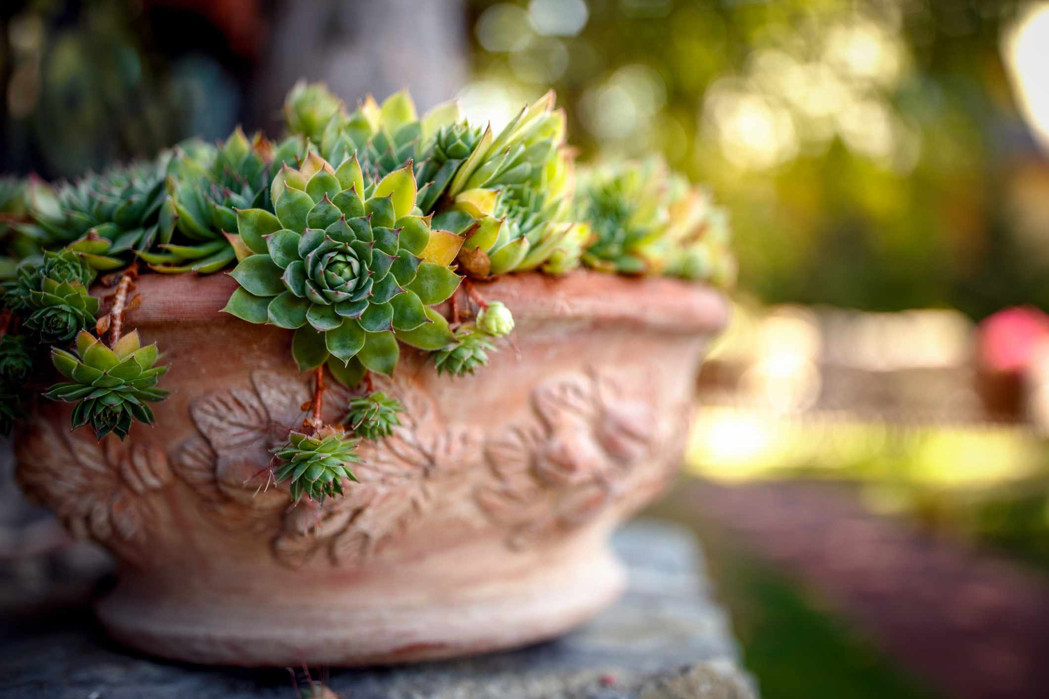 Green hen and chicks in planter