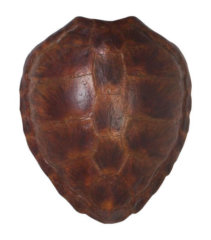 1stDibs Faux Green Turtle Shell
