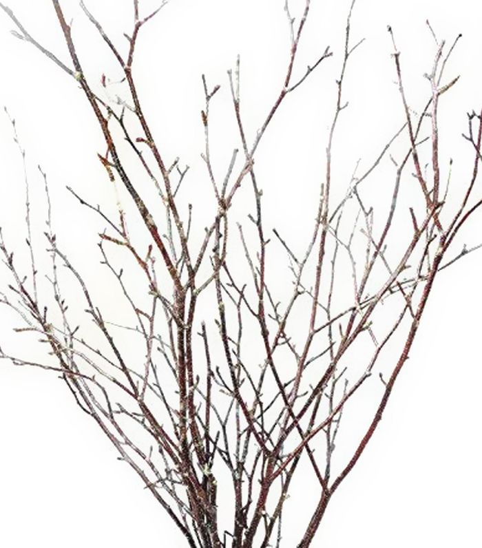 Tin Roof Treasure Small Natural Birch Branches Amazon Thanksgiving Decor