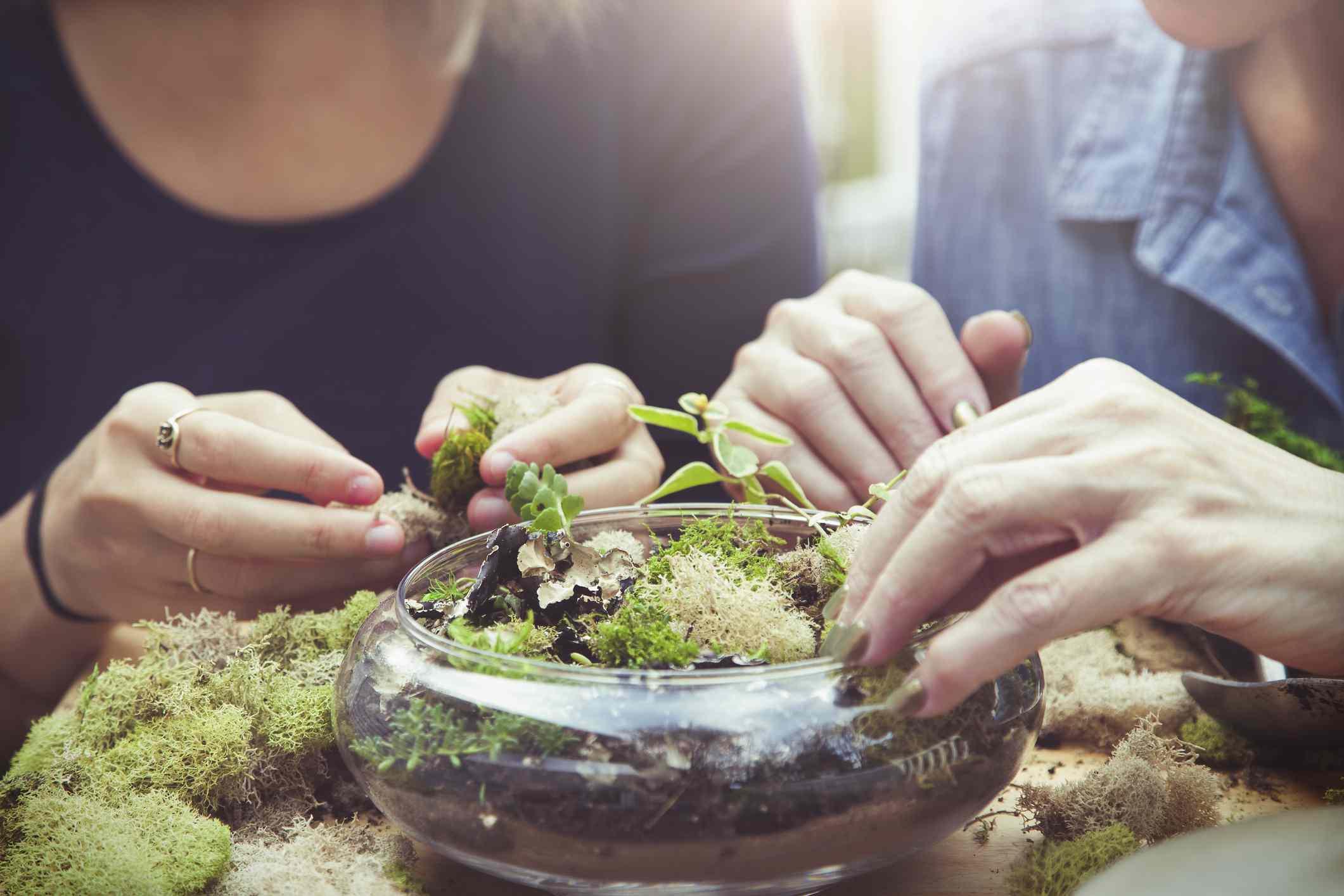 planting terrarium