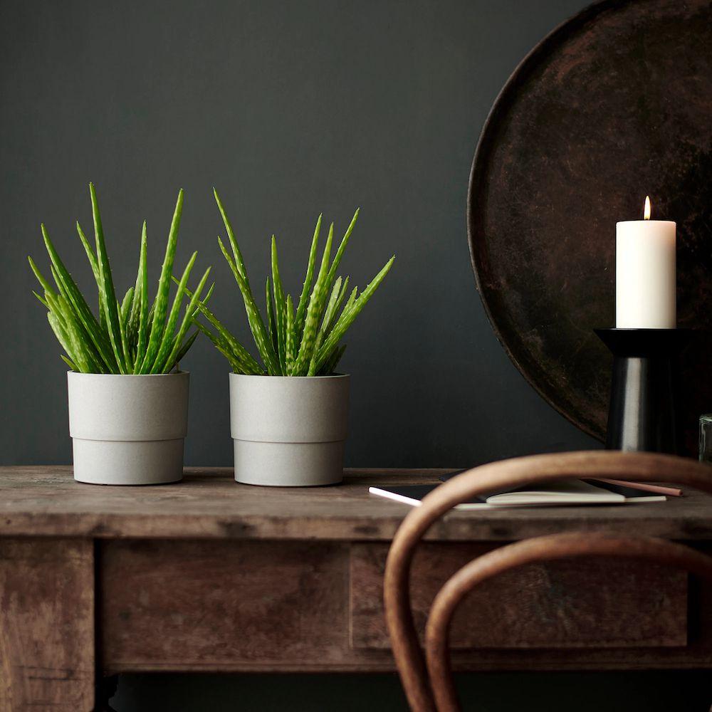 Aloe Plant IKEA lead image.