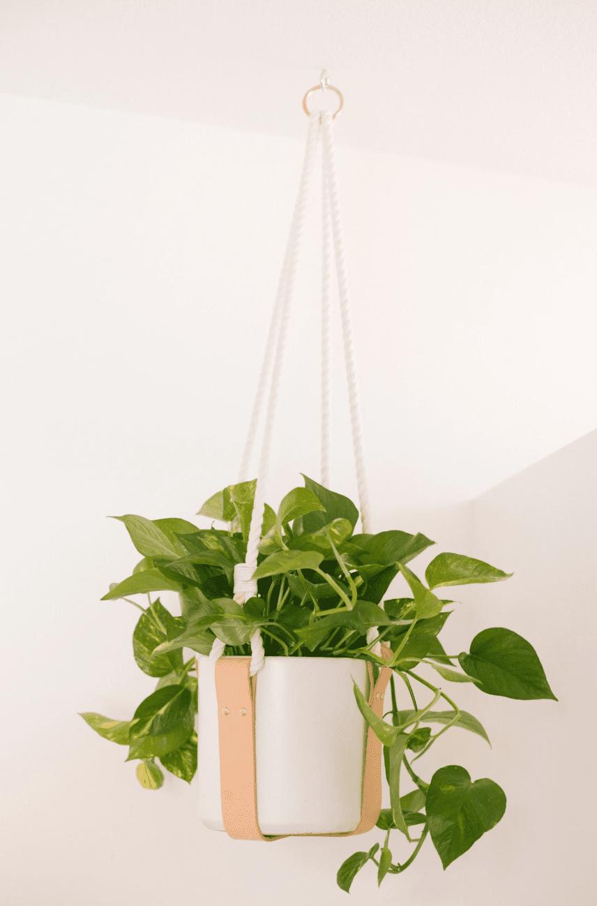 percha de planta