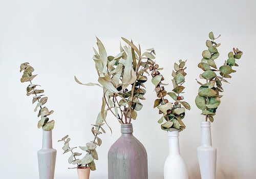 five opaque vases filled with dried eucalyptus stems against white background