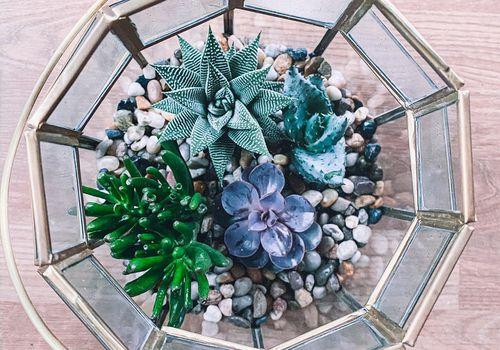Terrarium with plants