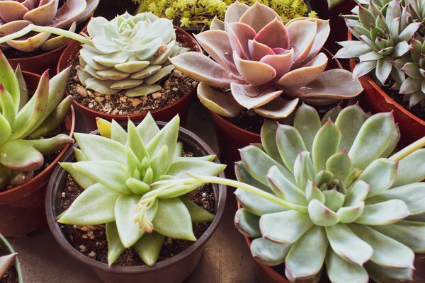 colorful houseplants