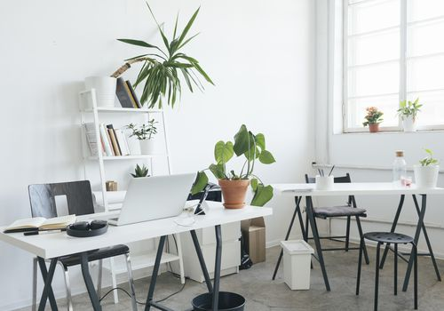 11 Plants That Will Add a Little Life to Your Desk and Office Space