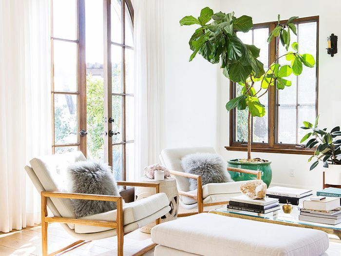 Decorate With Large Indoor Plants