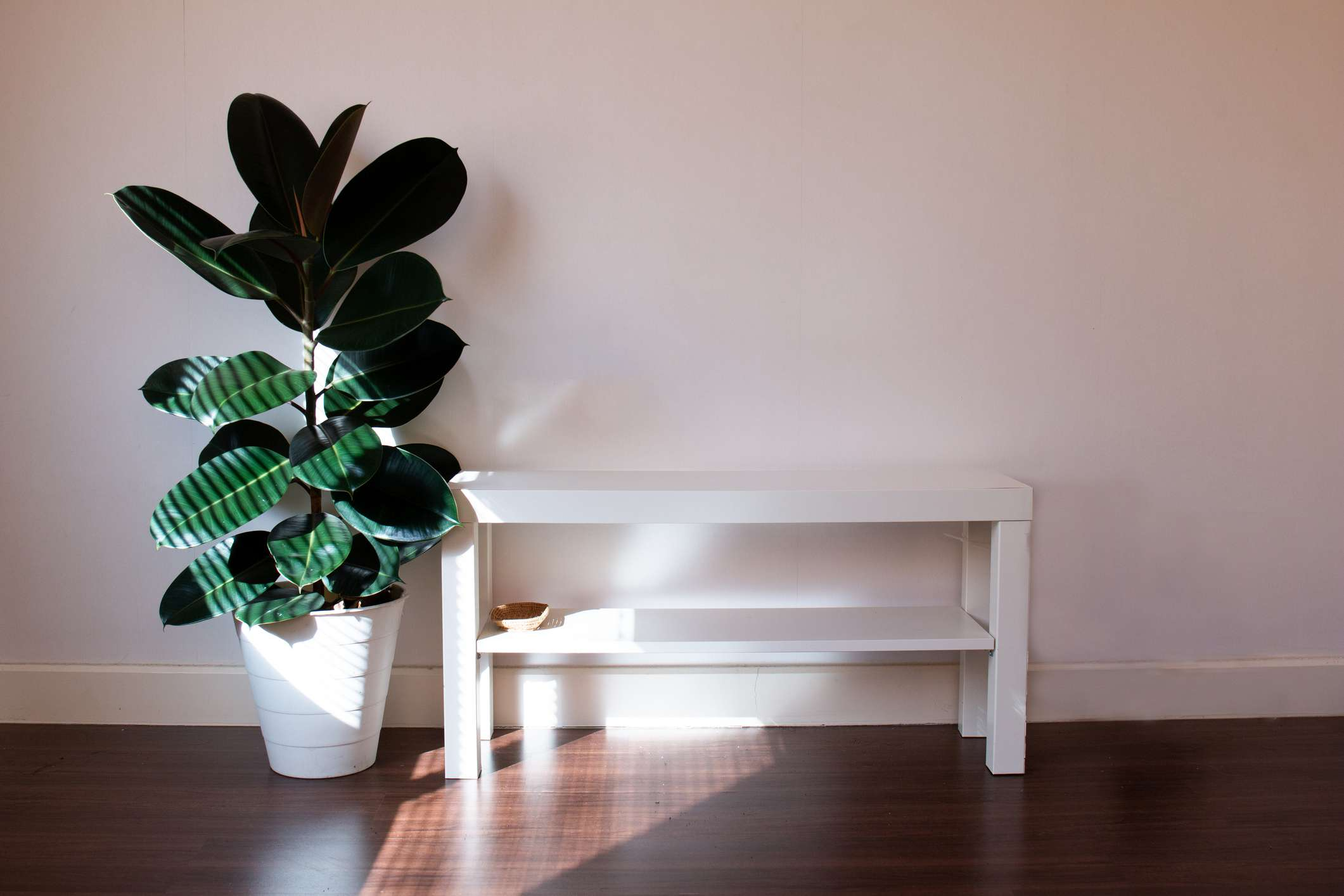 rubber plant next to a bench in a dark room