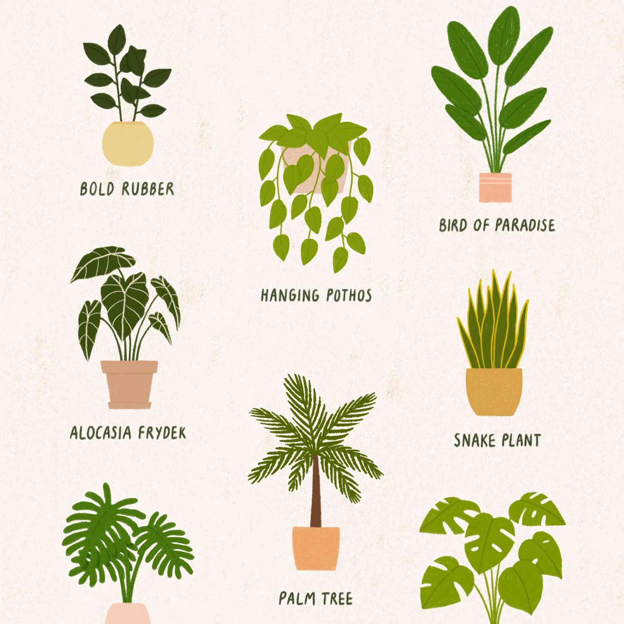 Best Indoor Plants to Brighten Up Your Home