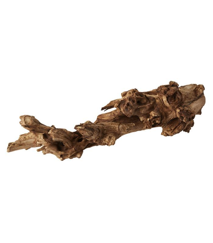 CB2 Natural Teak Root