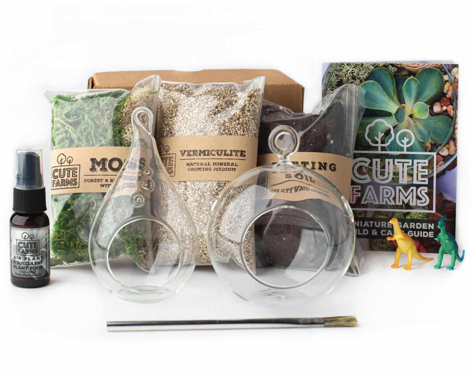 DIY Terrarium Starter Kit