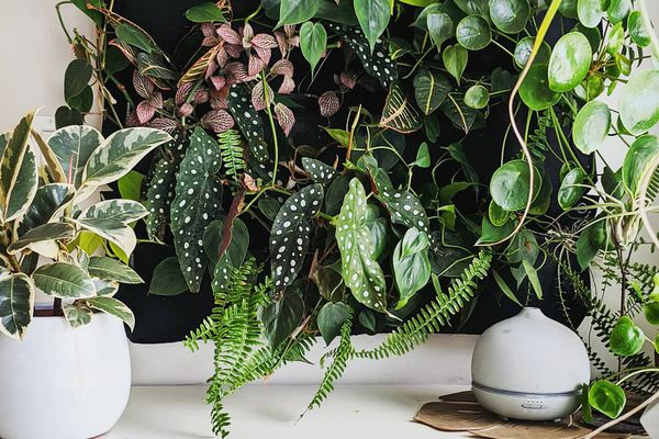 Large plant wall above white dresser.