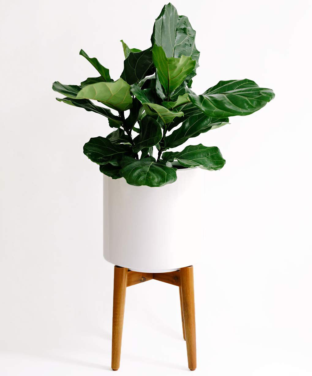Planter—Amazon Mother's Day Gifts